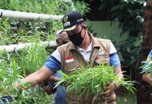 Photo of Sayuran Hydroponik Alternatif Persediaan Pangan Saat Ini
